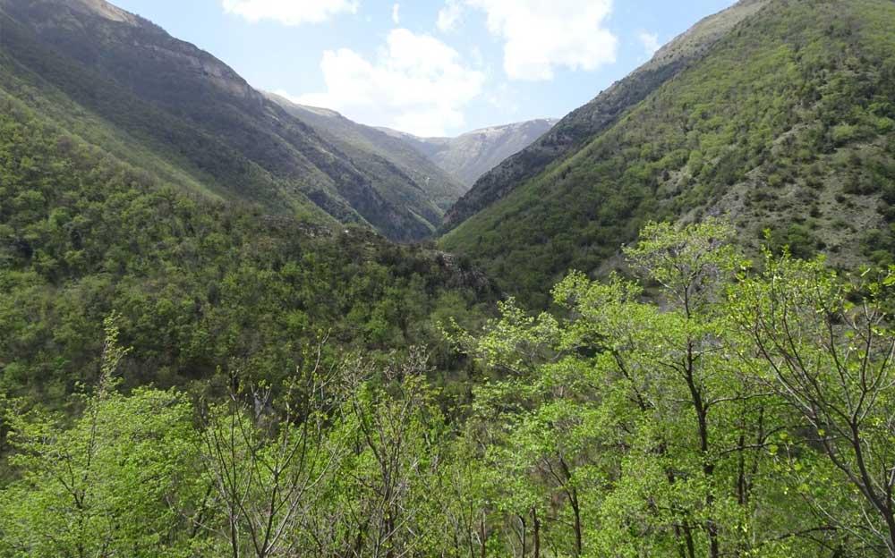 Blick in einen dichtbewachsenen, grünen Talkessel. Im Hintergrund ein Hügel mit blauem Himmel und weissen Wolken. Im Vordergrund kleine Bäume.