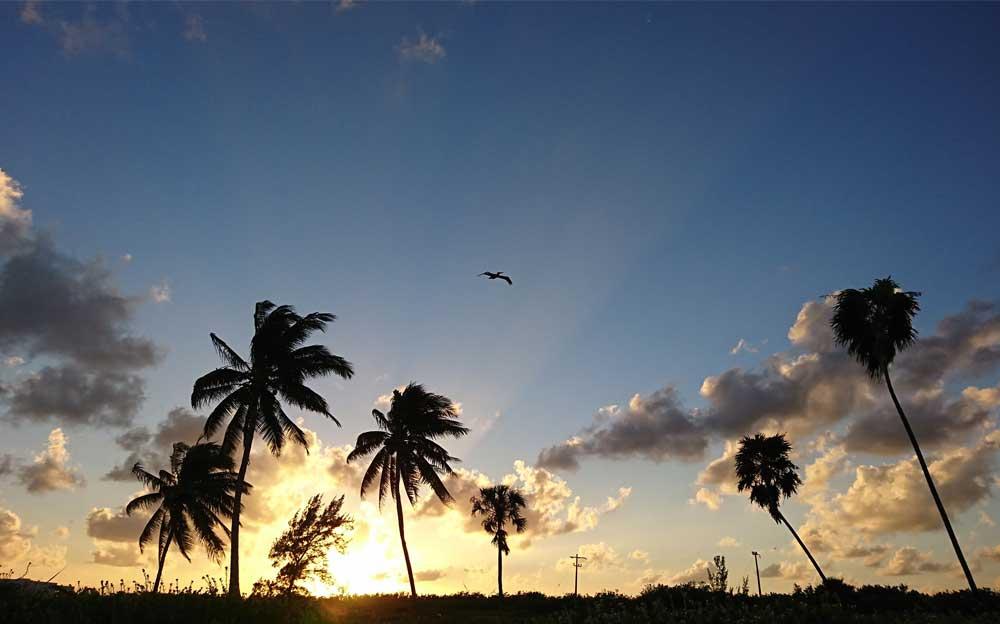 Küstenlandschaft mit Palmen. Hinter den Bäumen, zwischen den Wolken, geht die Sonne auf.
