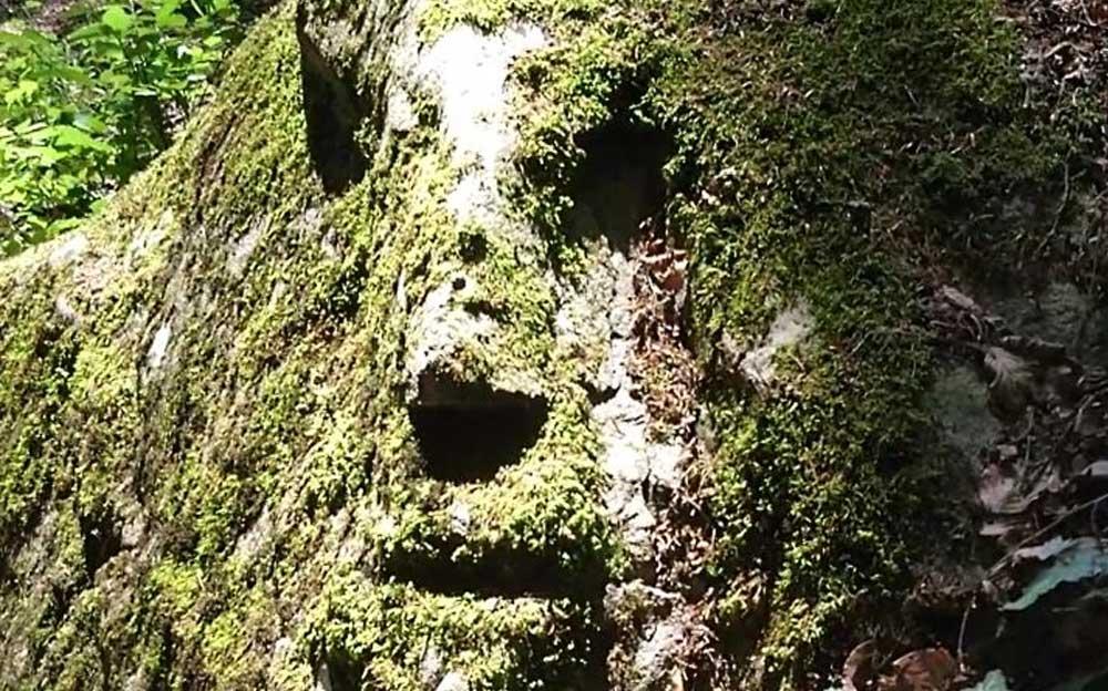 Ein bemooster Fels im Wald ähnelt in der Form einem menschlichen Gesicht.