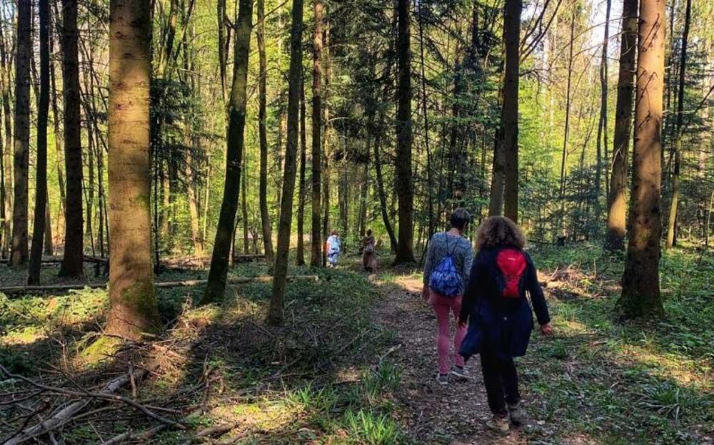 Vier Personen laufen einen Wanderweg im Wald entlang. Sie tragen unterschiedliche Kleidung und Rucksäcke.