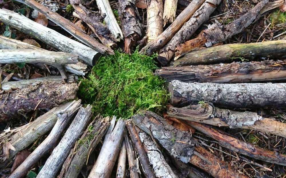 Holzstöcke liegen im Kreis um eine Moosbedeckte Stelle und ergeben ein Mandala