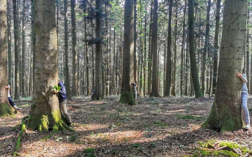 Drei Personen verstecken sich hinter drei Bäumen in einem Wald
